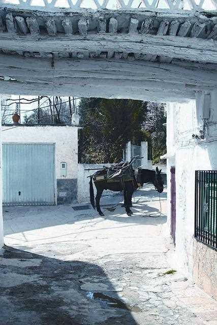 Ambiente singular de los pueblos de la Alpujarra./ Javier Callejas (Archivo GR)