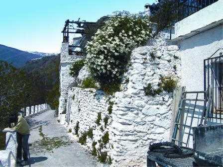 Muro de piedra de un huerto encalado./ Javi Callejas (Archivo GR)