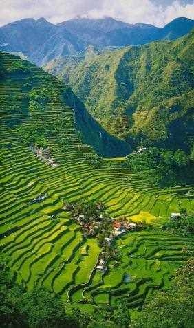 Bonita vista de las terrazas de arroz.