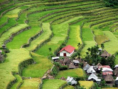 Cordillera tallada de Filipinas.
