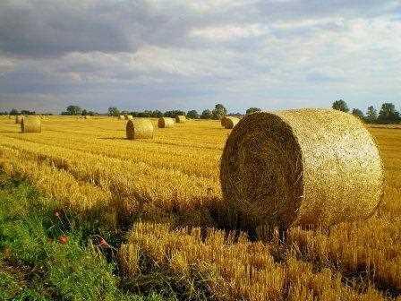 Otro tipo de paisaje agrario centroeuropeo.
