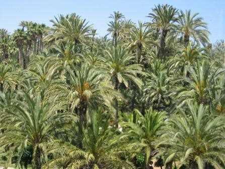 Conjunto de palmeras.