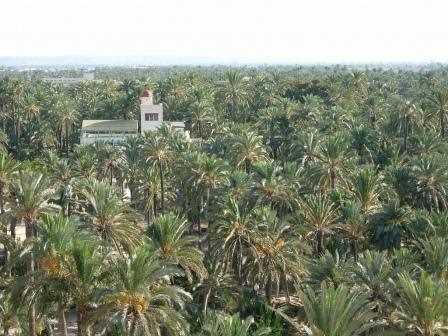 Una vista del Palmeral de Elche.