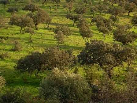 Claro ejemplo de paisaje agrario.