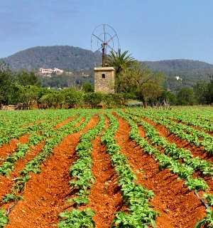 Un ejemplo de agricultura.