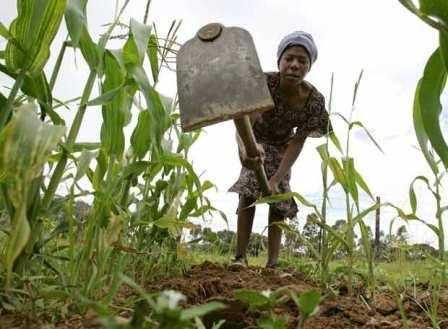 Agricultora en Centroáfrica.