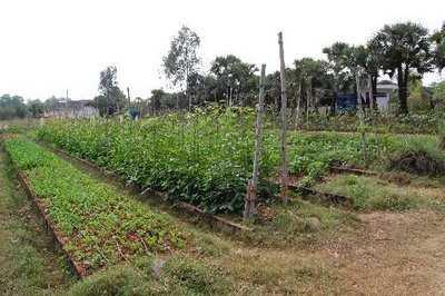 La agricultura sigue siendo un sector fundamental en muchas regiones del planeta.
