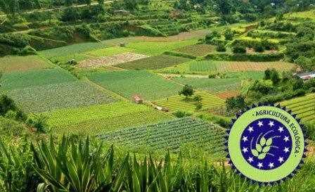 Cultivos de agricultura ecológica.