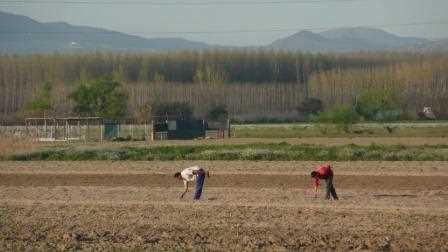 Agricultores trabajando la vega de Granada.