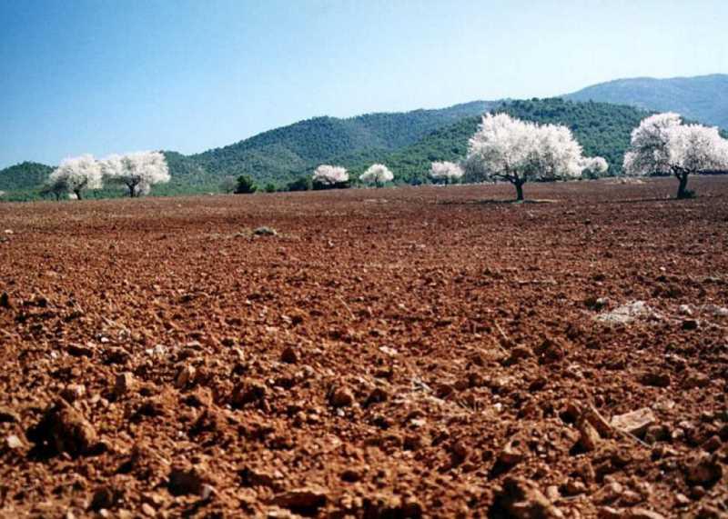 Piedemontes de la sierra cultivados. Acúmulos arcillosos para la agricultura cerealista.