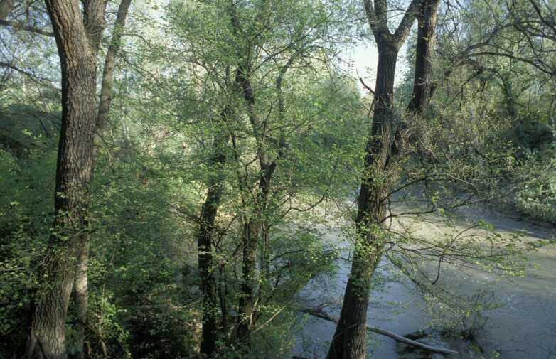 Río Genil, elemento vertebrador y generador de la Vega de Granada.