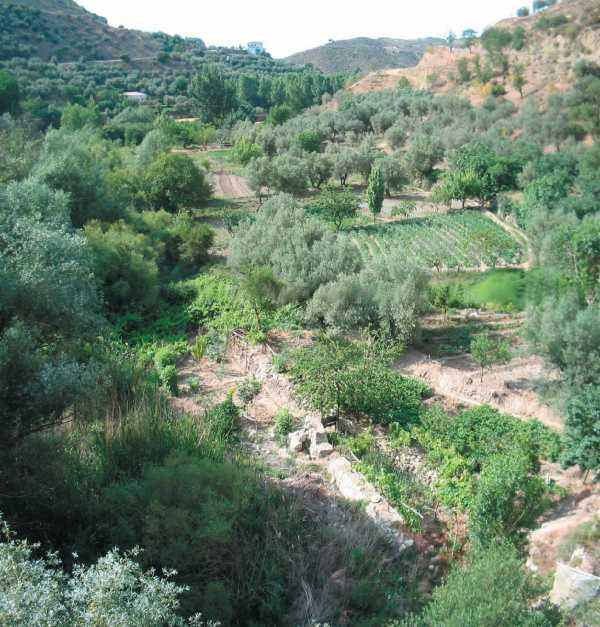 En el fondo de valle de los ríos que drenan el complejo orográfico de Castril, sobre las terrazas aluviales, resulta frecuente la presencia de cultivos hortofrutícolas de regadío tradicional.