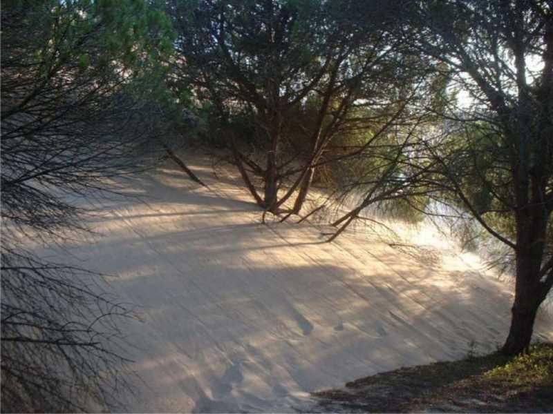 El contacto de la duna con las antiguas masas de pino piñonero.