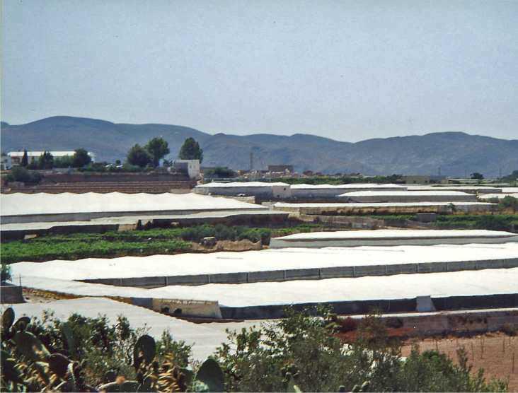 La ocupación propia de invernaderos de las zonas litorales se extiende a lo largo del pasillo de Berja