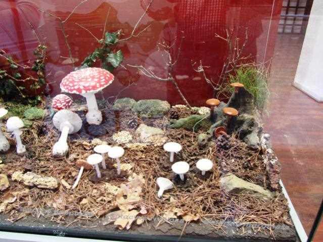 Imagen de setas tóxicas. FUENTE: turismodecazorla.com