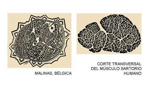 """Imagen del Libro de Eliel Saarinen """"La Ciudad Su Crecimiento, Su Declinación y Su Futuro. FUENTE: elblogdeFarina.com"""