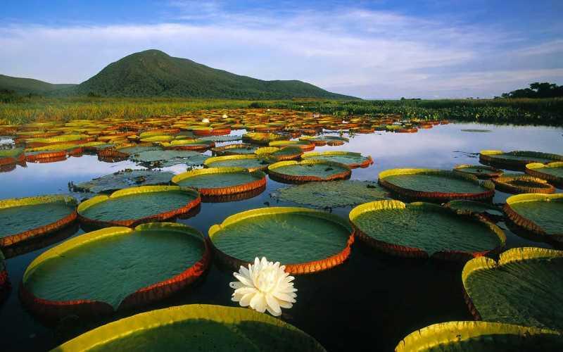 Pantanal en la frontera de Uruguay y Brasisl. Fuente: Iniciativa Latinoamericana del Paisaje