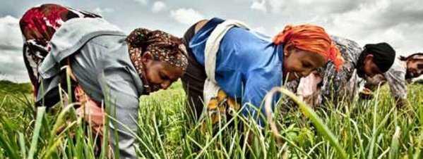 Mujeres campesinasde la comunidad de Halakum en Etiopía. Fuente: lavanguardia.es