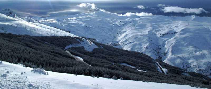 Vista de una zona de repoblación de pinar en Sierra Nevada.Fuente: nevasport.com