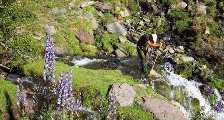 Toma de muestras para el estudio de las especies fluviales. . FUENTE: Observatorio de Cambio Global de Sierra Nevada. Metodología y seguimiento. 2012
