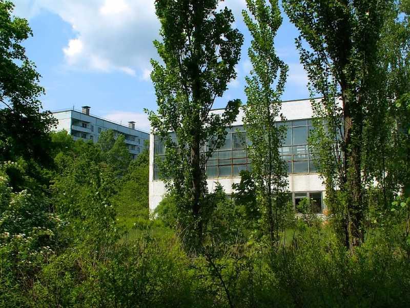 La vegetación lo cubre todo. Fuente: Panoramio.com