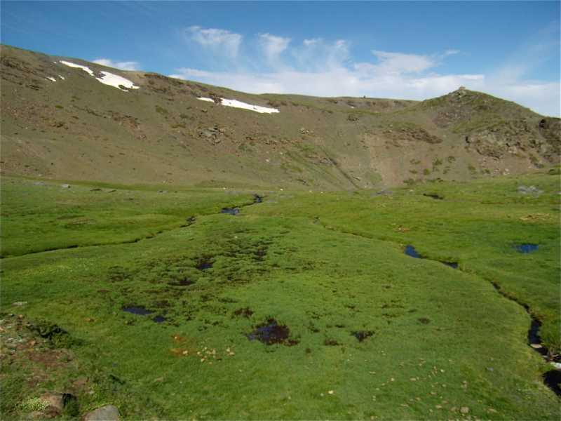 Pastos húmedos o borreguiles de Sierra Nevada. Fuente: http://wiki.obsnev.es/