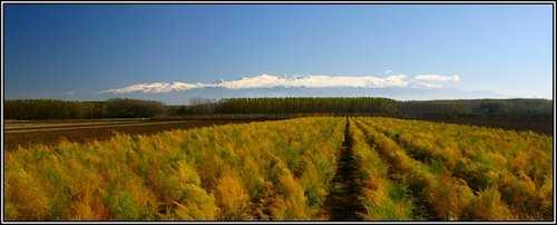 Imagen de los campos de Valderrubio, al Norte de la Vega, con los campos de choperas al fondo, en la vega del río Cubillas. Fuente: www.todopueblos.com